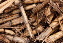 biomasse nell'industria manifatturiera
