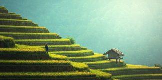 L'agricoltura fondamentale per lo sviluppo sostenibile