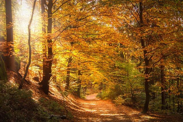 Foresta San Benedetto