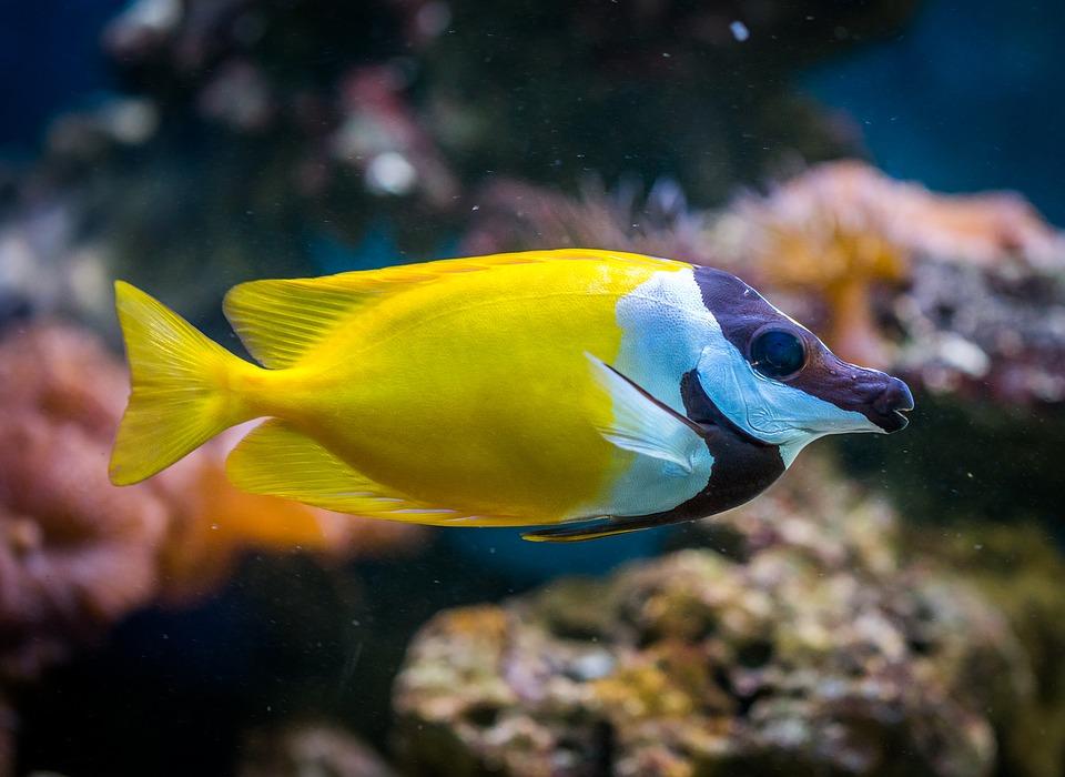 Tende subacquee per proteggere i pesci del mare canale for Immagini di pesci disegnati