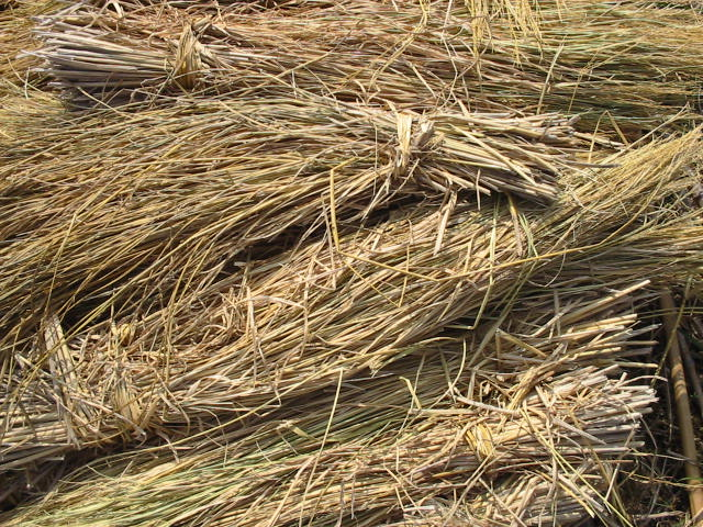 L'agricoltura circolare in Emilia Romagna