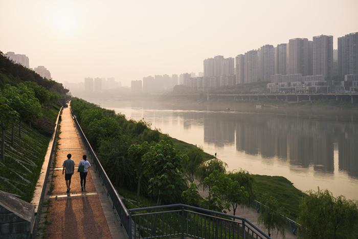Alberi urbani, la piantumazione salverà migliaia di persone