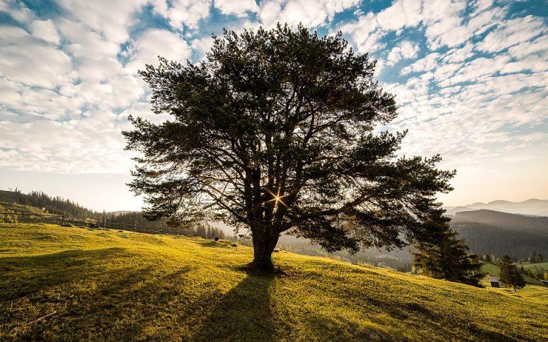 Come cambia il volto forestale e boschivo italiano