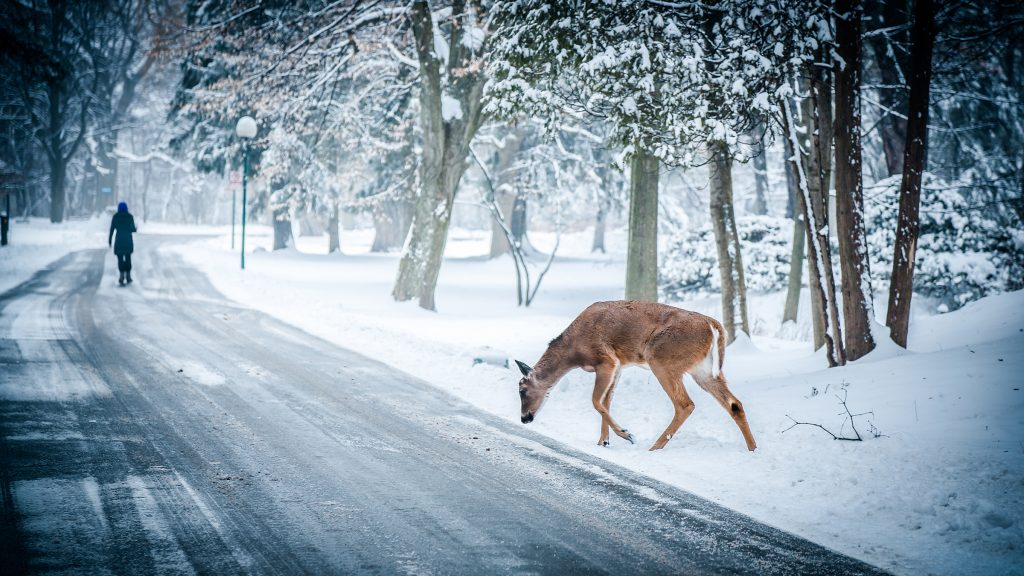 Wintermeteo 1024x576