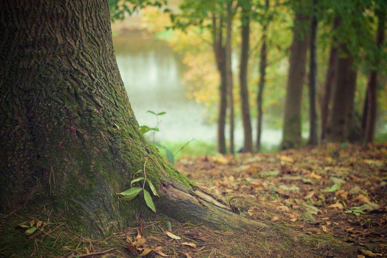 Dal Parlamento Europeo nuove regole su gestione foreste e assorbimento CO2