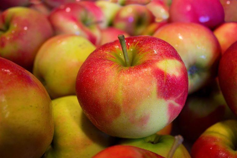 Frutta, alimenti biologici iniziative antispreco nelle scuole milanesi