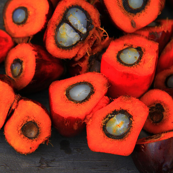 olio di palma certificato