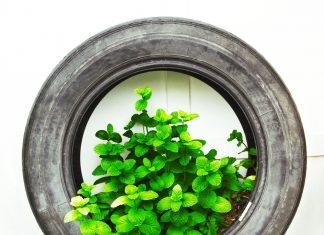 pneumatico green