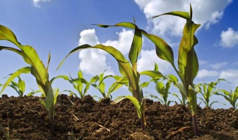 L'agricoltura guarda al biometano in ottica di economia circolare