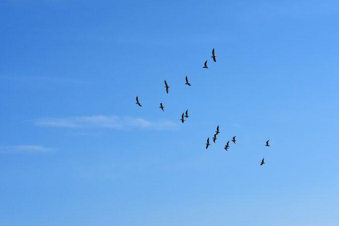Uccelli E1518804751110