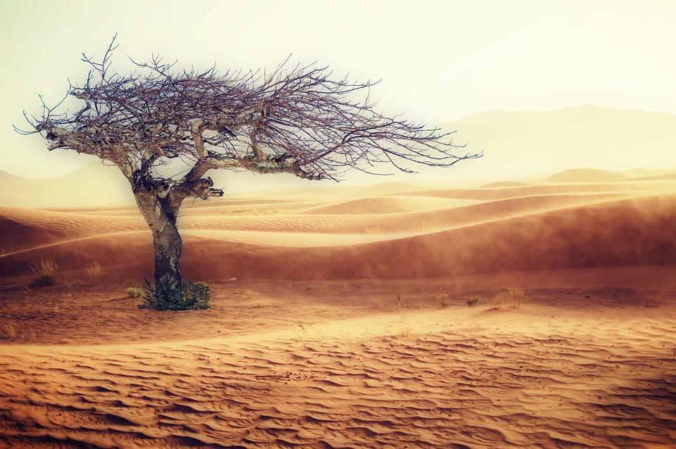 Desert Albero