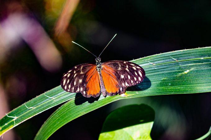 Biodiversità E1526919318474