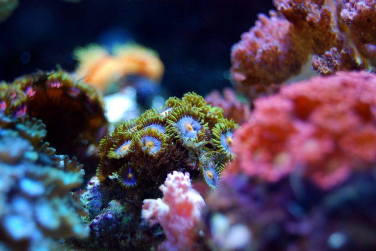 L'innovazione a servizio della tutela dei coralli