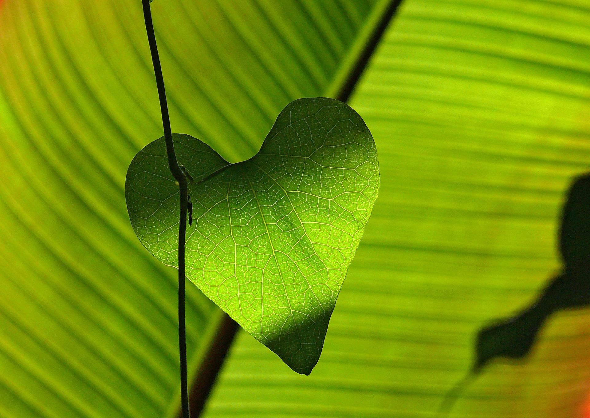 green_cuore_verde dubbi sul superministero
