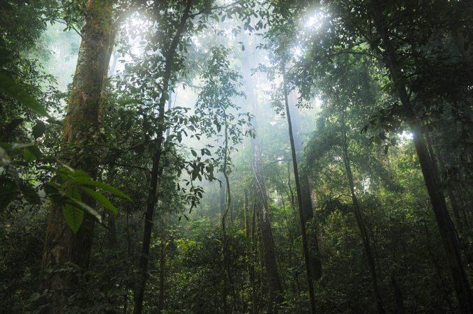 foreste italiane Unesco
