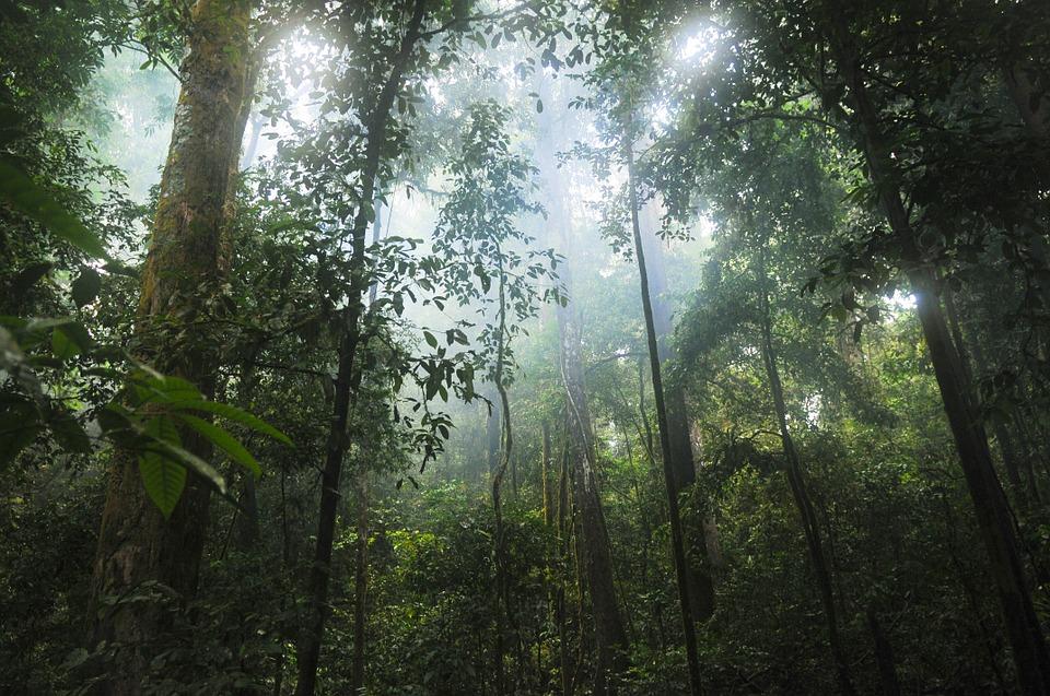 Forestatropicaledef