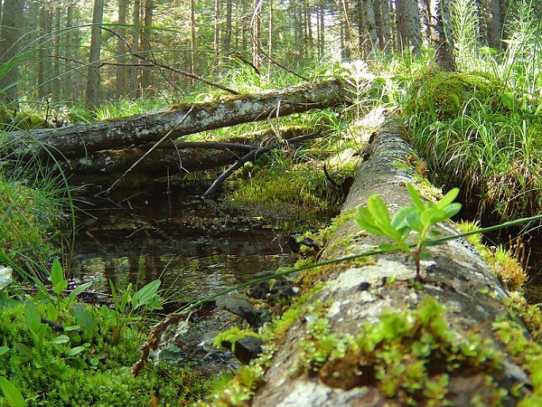 """Forests and bad weather, PEFC: """"To go back to balance' situation are necessary 100 years"""""""