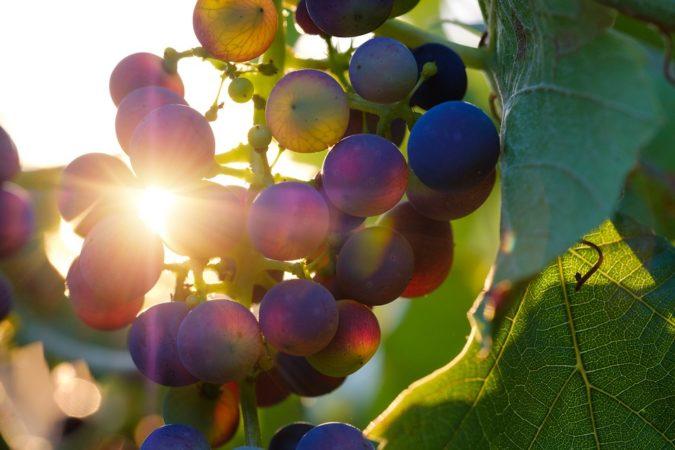 prodotti agroalimentari vitivinicole