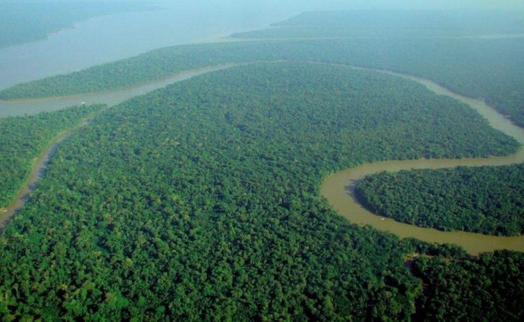 brasile foreste pluviali