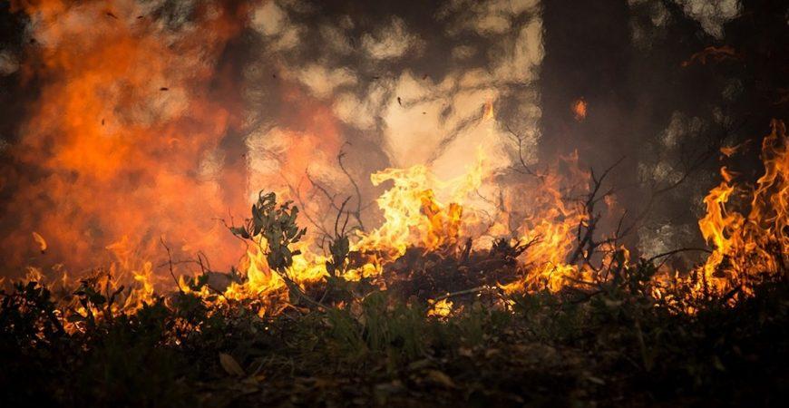 incendi Calabria agosto 2021