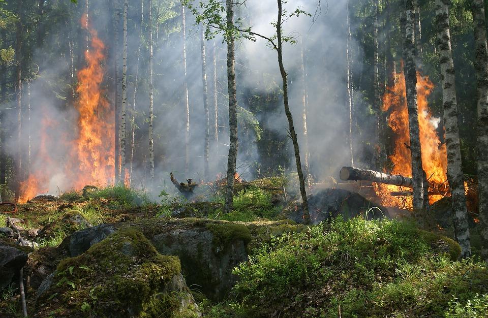 Forest Fire Incendio Clima