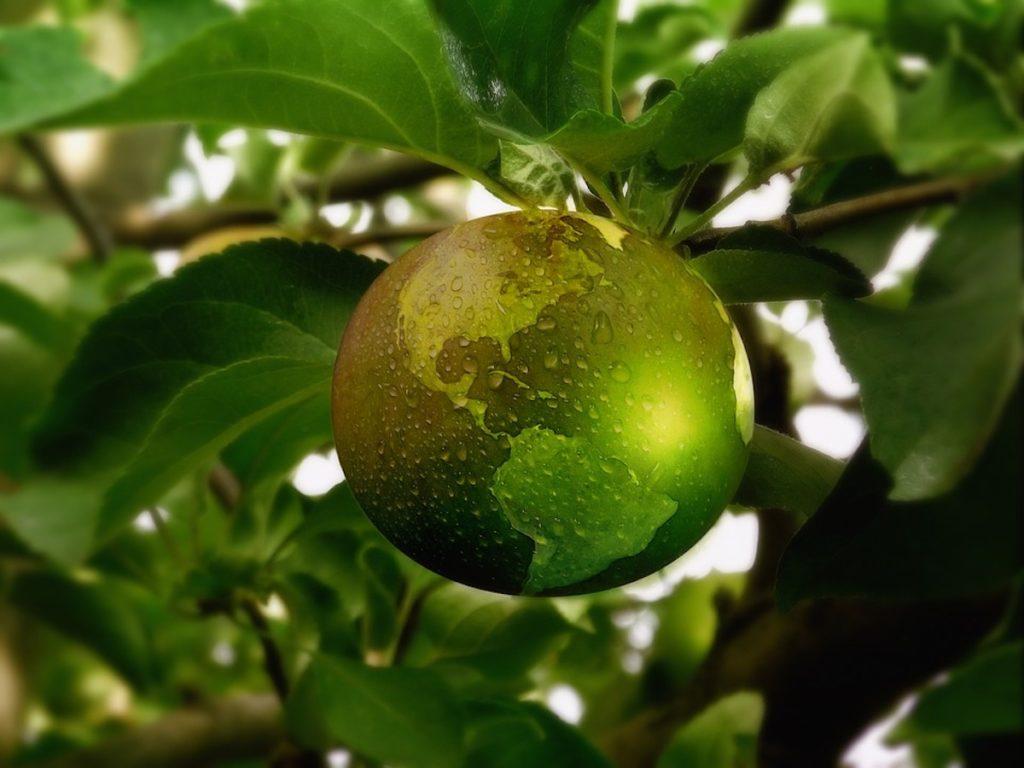 Green Foodok 1024x768
