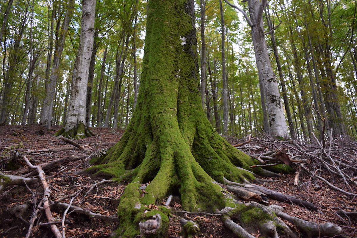 fondo foreste