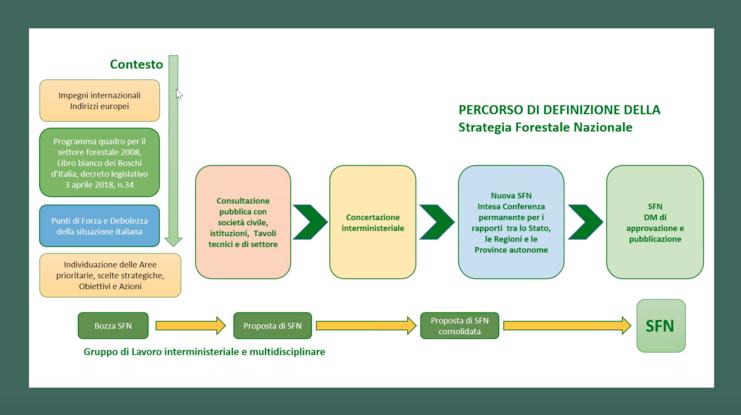 Strategia forestale nazionale