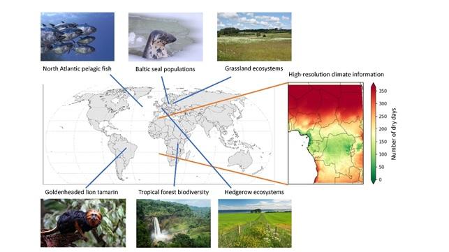 cs3 Biodiversità globale