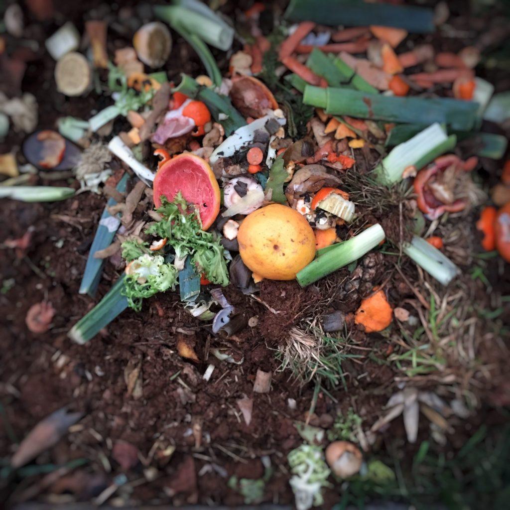 rifiuti organici raccolta