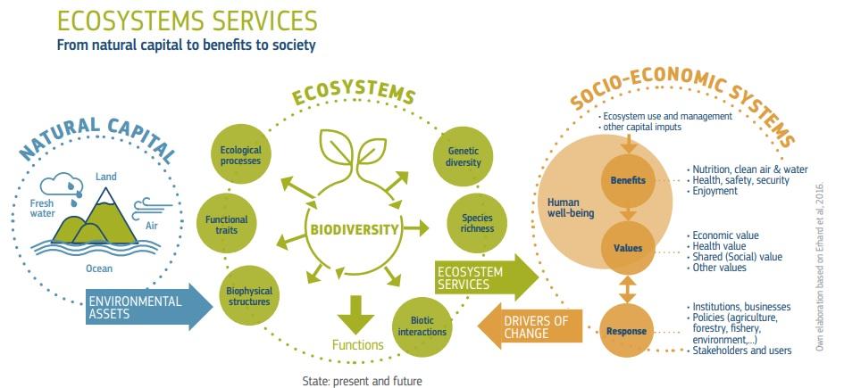 ecosystem services economia blu 2020