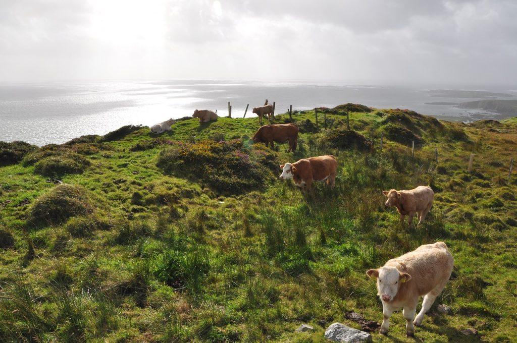Cows 3636137 1280 1024x680