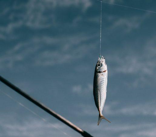 amo pesca