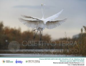 Foto vincitrice concorso Obiettivo Terra 2021 Danza di 2 aironi