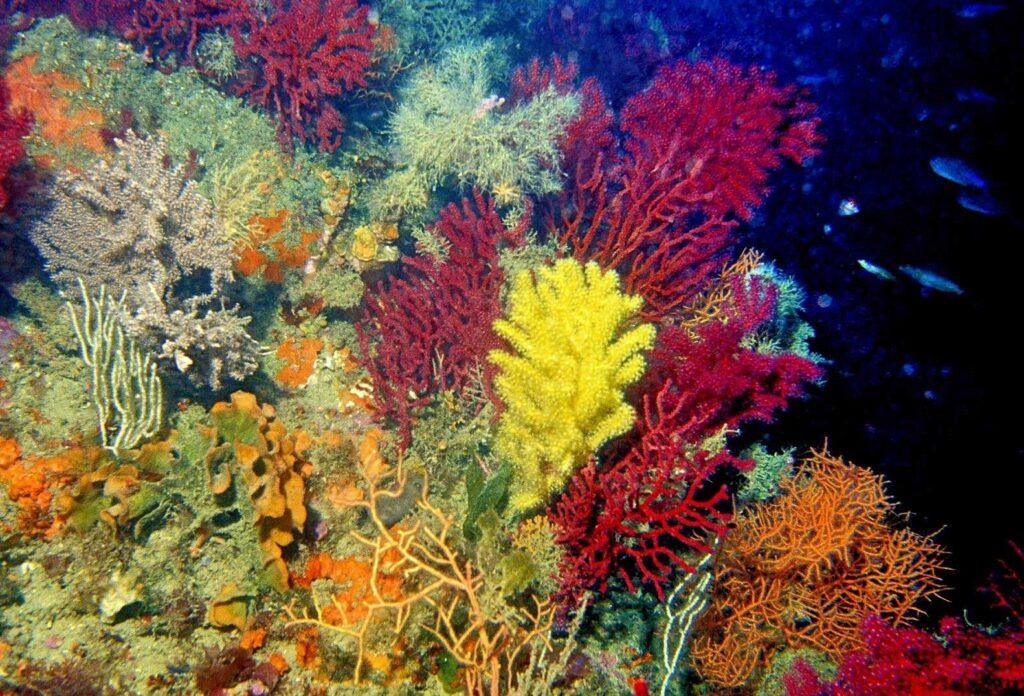 coralligeno