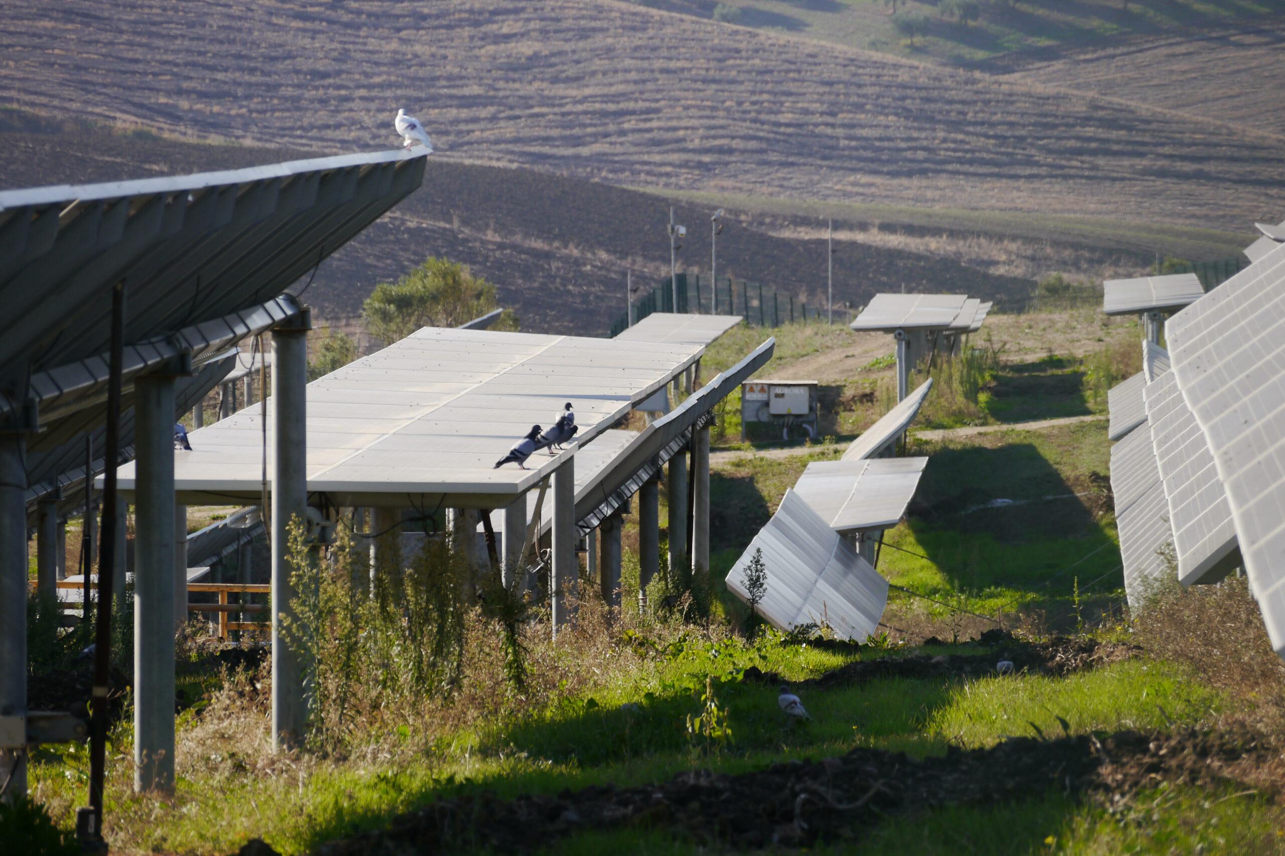 impianto agrivoltaico